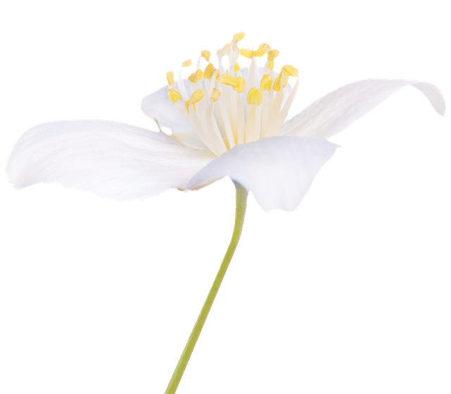Home Page Flower Image